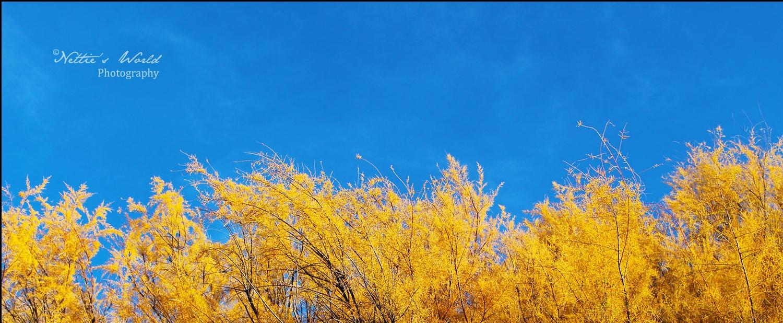 Autumn on the Carrizo